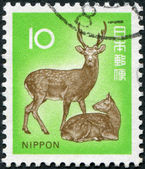A stamp printed in Japan, depicts Cervus nippon, circa 1972 — Stock Photo