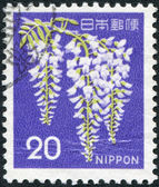 A stamp printed in Japan, shows a flowering Wisteria sinensis, circa 1969 — Stock Photo