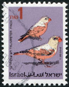 A stamp printed in the Israel portrayed Trumpeter Finch (Rhodopechys githaginea), circa 1995 — Stock Photo