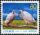 A stamp printed in Japan, prefecture Niigata, depicted Youyou, Yangyang, a couple Crested Ibis in China, circa 1999 — Stock Photo