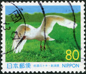 A stamp printed in Japan, prefecture Niigata, shown latest Crested Ibis (died in 2003), circa 1999 — Stock Photo