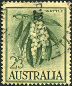 A stamp printed in Australia, shows Wattle (Acacia melanoxylon), circa 1959 — Stock Photo