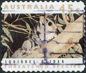 A stamp printed in Australia, shows the Squirrel Glider (Petaurus norfolcensis), circa 1992 — Stock Photo