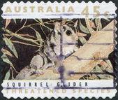 A stamp printed in Australia, shows the Squirrel Glider (Petaurus norfolcensis), circa 1992 — Foto de Stock