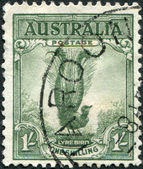 A stamp printed in Australia, shows the Superb Lyrebird (Menura novaehollandiae), circa 1937 — Stock Photo
