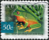 A stamp printed in Australia, shows the Orange-thighed Frog (Litoria xanthomera), circa 2003 — Stock Photo
