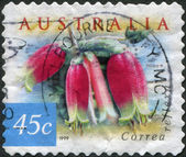 A stamp printed in Australia, shows Correa reflexa, circa 1999 — Stock Photo
