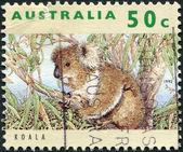 A stamp printed in Australia, shows the Koala (Phascolarctos cinereus), circa 1992 — Foto de Stock