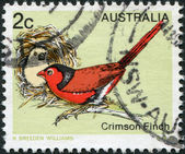 A stamp printed in Australia, shows the Crimson Finch (Neochmia phaeton), circa 1979 — Stock Photo