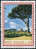 A stamp printed in Italy, shows the Stone Pine (Pinus pinea), circa 1966 — Stock Photo