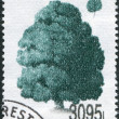 ROMANIA - CIRCA 1994: A stamp printed in the Romania, shows Scots Pine - Stock Photo