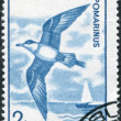 ROMANIA - CIRCA 1991: A stamp printed in the Romania, shows a Pomarine Skua — Zdjęcie stockowe