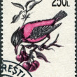 ROMANIA - CIRCA 1993: A stamp printed in the Romania, shows the Rosy Starling (Sturnus roseus), circa 1993 - Stockfoto
