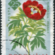 ROMANIA - CIRCA 1961: A stamp printed in the Romania, shows Peony (Paeonia Romanica), circa 1961 — Stok fotoğraf