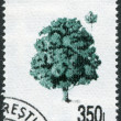 ROMANIA - CIRCA 1994: A stamp printed in the Romania, shows Acer pseudoplatanus, circa 1994 — Stock Photo