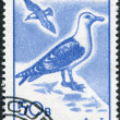 ROMANIA - CIRCA 1991: A stamp printed in the Romania, shows the Great Black-backed Gull (Larus marinus), circa 1991 - Stock Photo