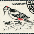 ROMANIA - CIRCA 1993: A stamp printed in the Romania, shows the Great Spotted Woodpecker — Stok fotoğraf
