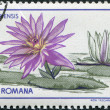 ROMANIA - CIRCA 1955: A stamp printed in the Romania — Foto de Stock