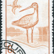 ROMANIA - CIRCA 1991: A stamp printed in the Romania, shows the Black-tailed Godwit, (Limosa limosa), circa 1991 - Stock Photo
