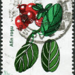 ROMANIA - CIRCA 2001: A stamp printed in the Romania, shows Vaccinium vitis-idaea, circa 2001 - Stock Photo