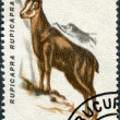 ROMANIA - CIRCA 1993: A stamp printed in the Romania - Stock Photo