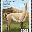 Royalty-Free Stock Photo: SAHARA - CIRCA 1996: A stamp printed in Sahrawi Arab Democratic Republic (SADR), shows a Guanaco (Lama guanicoe), circa 1996