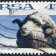 SOUTH AFRIC- CIRC1972: stamp printed in South Afric(RSA), depicts sheep Merino, circ1972 — Stock Photo #12363317