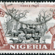 NIGERIA - CIRCA 1953: Postage stamps printed in Nigeria, shows the Baobab and the herd, circa 1953 — Stock Photo