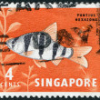 SINGAPORE - CIRCA 1981: Postage stamps printed in Singapore, is depicted toy fish the pentazona barb (Puntius pentazona), circa 1981 — Stock Photo #12363521