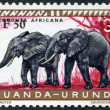 Stock Photo: RWANDA-URUNDI - CIRC1959: stamp printed in Ruanda-Urundi, was depicted elephants (overprint of 1961), circ1959