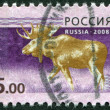 Stock Photo: RUSSIAN-CIRC2008: stamp printed in RussiFederation