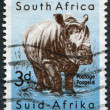 Stock Photo: SOUTH AFRICA-CIRCA 1954: A stamp printed in the South Afric
