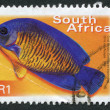 SOUTH AFRICA-CIRCA 2000: A stamp printed in the South Africa, depicts a tropical fish Coral Beauty, circa 2000 - Stock Photo