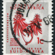 SOUTH AFRICA-CIRCA 1968: A stamp printed in the South Africa, depicts Coral Tree Flower (Erythrina lysistemon), circa 1968 — Stock Photo #12363721