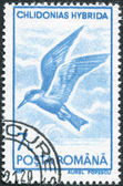 ROMANIA - CIRCA 1991: A stamp printed in the Romania, shows the Whiskered Tern — Stock Photo