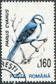 ROMANIA - CIRCA 1993: A stamp printed in the Romania, shows the Azure Tit — Stock Photo