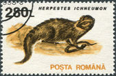 ROMANIA - CIRCA 1993: A stamp printed in the Romania — Stock Photo