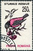 ROMANIA - CIRCA 1993: A stamp printed in the Romania, shows the Rosy Starling (Sturnus roseus), circa 1993 — Stock Photo