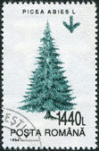 ROMANIA - CIRCA 1994: A stamp printed in the Romania, shows the Norway Spruce — Stock Photo