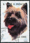 S. TOME E PRINCIPE - CIRCA 1995: A stamp printed in the S. Tome e Principe — Stock Photo