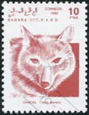 SAHARA - CIRCA 1992: A stamp printed in Sahrawi Arab Democratic Republic (SADR) — Stock Photo