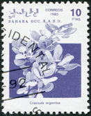 Description:SAHARA - CIRCA 1992: A stamp printed in Sahrawi Arab Democratic Republic (SADR) — Stock Photo
