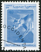 SAHARA - CIRCA 1998: A stamp printed in Sahrawi Arab Democratic Republic (SADR) — Stock Photo