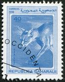 SAHARA - CIRCA 1998: A stamp printed in Sahrawi Arab Democratic Republic (SADR) — Stock Photo