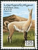 SAHARA - CIRCA 1996: A stamp printed in Sahrawi Arab Democratic Republic (SADR), shows a Guanaco (Lama guanicoe), circa 1996 — Stock Photo