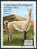 SAHARA - CIRCA 1996: A stamp printed in Sahrawi Arab Democratic Republic (SADR), shows a Guanaco (Lama guanicoe), circa 1996 — Stock Photo