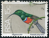 SOUTH AFRICA - CIRCA 1974: A stamp printed in South Africa (RSA) — Stock Photo