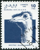 SAHARA - CIRCA 1992: A stamp printed in Sahrawi Arab Democratic Republic (SADR) — Stock Photo