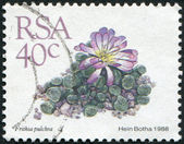 SOUTH AFRICA - CIRCA 1988: A stamp printed in South Africa (RSA), depicts a flower Didymaotus lapidiformis, circa 1988 — Stock Photo