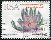 SOUTH AFRICA - CIRCA 1993: A stamp printed in South Africa (RSA), depicts a flower Stapelia grandiflora, circa 1993 — Stock Photo